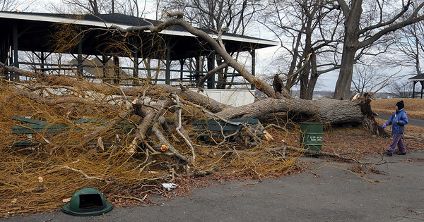 Salem:<br /> Last nights wind storm knocked down a willow tree at Salem Willows as well as other trees. <br /> Photo by Ken Yuszkus/Salem News, Friday, February 26, 2010.