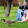 Hamilton:<br /> Rose Sharpels, of Lynn, left, and Colleen Foley, of Dracut, feed bread pieces to the Canada geese at Patton Park while enjoying their lunch break. They often have lunches in the park away from their jobs in Beverly.<br /> Photo by Ken Yuszkus/Salem News, Monday, April 26, 2010.
