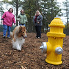 Beverly:<br /> From left, Ilene MacDonald, Tina McManus, co-chairs, and Susan Whitelocks, volunteer, of the Beverly Dog Park Committee, watch Tina's dog, Casey, walk toward the fire plug at the new dog park.<br /> Photo by Ken Yuszkus/Salem News, Wednesday, October 26, 2011.