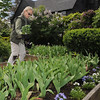 Salem:<br /> Landscape designer Robyn Kanter, plants flowers at the gardens at The House of the Seven Gables. She is speaking Sunday (May 16) on the gardens and the 100 years that it has been in existence.<br /> Photo by Ken Yuszkus/Salem News, Monday, May 10, 2010.