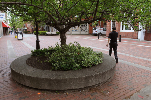 Salem:<br /> A pedestrian walks past one of the raised planting beds containing a tree and shrubs on the Essex Street pedestrian mall .<br /> Photo by Ken Yuszkus/Salem News, Friday, May 11, 2012.