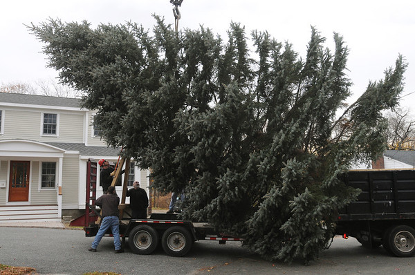 Danvers:<br /> The tree is placed on a truck with an attached trailer after it was cut at 14 Brookwood Lane.<br /> Photo by Ken Yuszkus/Salem News, Tuesday, November 15, 2011.