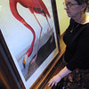 Peabody:<br /> Nancy Barthelemy, archivist, stands near one of the framed Auduborn prints, which depicts a flamingo. It is one of many prints owned by the Peabody Institute Library.<br /> Photo by Ken Yuszkus/Salem,  News, Monday,  December 13, 2010.