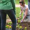 Salem:<br /> Jeanette Abbene, 8th grader, plants a lettuce seedling into the prepared soil of the raised beds in front of the Saltonstall School as part of the Earth Day programs on Wednesday morning.<br /> Photo by Ken Yuszkus/Salem News, Wednesday, May 4, 2011.