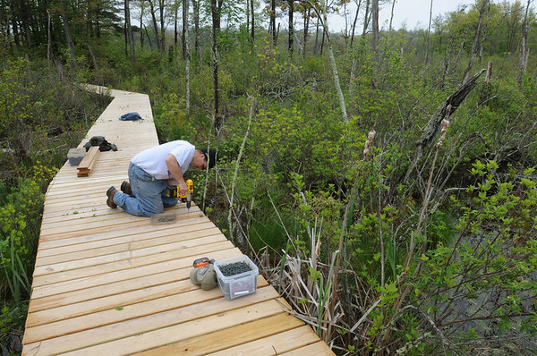 Danvers:<br /> Matthew Duggan screws the planks down on the walkway of the SwampWalk project  He, along with others, were working on the walkway Thursday morning.<br /> Photo by Ken Yuszkus/Salem News, Thursday, May 19, 2011.