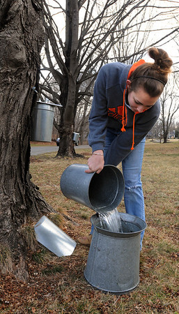 Wenham:<br /> Claudia Becker collects sap from the buckets attached to maple trees in Wenham. She is an Essex Aggie intern working for Mass Auduborn at the Ipswich Wildlife Sanctuary.<br /> Photo by Ken Yuszkus/Salem News, Thursday, February 2, 2012.