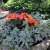 Danvers:<br /> Cile and John Burbidge's Garden will be included on the Danvers Garden Tour this year.<br /> Photo by Ken Yuszkus/Salem News, Monday, June 20, 2011.