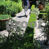 Salem:<br /> Jonathan Reardon walks down the pathway of his garden. Jonathan and Jen Reardon's Chestnut Street garden will be featured on the Salem Garden Club's Garden Tour on July 11 and 12.<br /> Photo by Ken Yuszkus/Salem News, Monday, July 6, 2009.