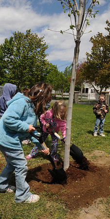 Salem:<br /> Alexia Pappas, left, and Natalia Fila, students from the Early Childhood Center, place shovelfuls of wood chips around a red maple tree that the class is planting on the school grounds for Arbor Day. National Grid Forestry Department helped the school plant two trees.<br /> Photo by Ken Yuszkus/Salem News, Thursday, April 29, 2010.