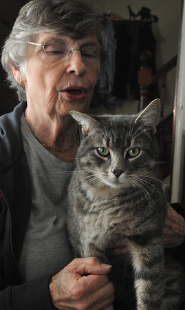 Peabody:<br /> Barbara Jones holds Victor the cat, who was nearly killed by an illegal rabbit snare in the Saugus Marsh, has been operated on and nursed back to health by PALS, a Salem based animal rescue group.<br /> Photo by Ken Yuszkus/Salem News, Thursday, December 1, 2011.
