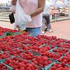 Salem:<br /> Teresa Barrientos of Salem purchases some red raspberries at the Salem Farmers Market.<br /> Photo by Ken Yuszkus/Salem News, Thursday, July 5,  2012.