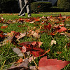 Beverly:<br /> Michael Pelletier uses a leafblower to move the numerous leaves covering his lawn Friday morning.<br /> Photo by Ken Yuszkus/Salem News, Friday, October 28, 2011.
