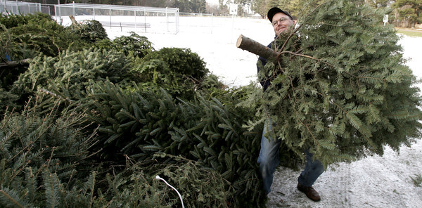 Wenham:<br /> Bill Clifford of Wenham is about to throw his Christmas tree onto the pile of trees that are in Pingree Park waiting to be recycled into woodchips.<br /> Photo by Ken Yuszkus/The Salem News, Tuesday, January 8, 2013.