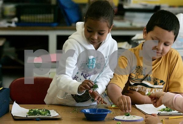 Salem: Bentley School first - graders, Kayla Demers and Jayson Fallis, glue pieces of broccoli in Tricia Whitten's class.  Students have been using a new food grant to buy fruits and vegetables and incorporate them into lessons and snack time.  Photo by Mark Lorenz/Salem News