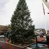 Danvers: Danvers's Christmas Tree, which was donated by  Green Chiropractic in Danvers. Photo by Mark Lorenz/Salem News