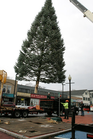 Danvers: Artie Balser from the forestry department, uses a tow line to help guide the cities Christmas Treet. Helping is Dan Levesque. The tree was donated by Green Chiropractic in Danvers. Photo by Mark Lorenz/Salem News