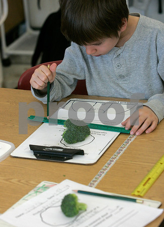 Salem: Bentley School first - grader, Cody Connatser measures this piece of broccoli in Tricia Whitten's class.  Students have been using a new food grant to buy fruits and vegetables and incorporate them into lessons and snack time.  Photo by Mark Lorenz/Salem News