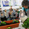 "Salem: Nathaniel Bowditch School ESL kindergarten teacher, Lucille Ouellette, teaches her students about flowers an dhow to plant them.  Ouellette won,""Teacher of the Year""  from the Massachusetts Assocation of Teachers of speakers of other languages. Photo by Mark Lorenz/Salem News"