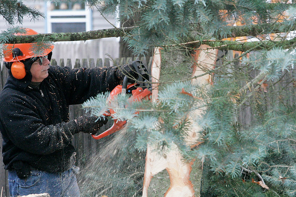 Danvers: Dave Ambrose from the forest department, uses his chainsaw to trim the lower section of this white fir tree. The tree, which was donated by Green Chiropractic in Danvers, will be placed in Danvers Square. Photo by Mark Lorenz/Salem News