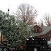 Danvers: City workers carefully lower this white fir tree onto a truck, to be taken to Danvers Square. The tree was donated by Green Chiropractic in Danvers. Photo by Mark Lorenz/Salem News