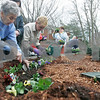 "Beverly: Claire Ross a patient, works on planting flowers at Ledgewood Rehabilitaion and Skilled Nursing Center, with the help of Mary Loe Ferriero of he Beverly Garden Club. The club was working with patients at Ledgewood to celebrate Earth Day by planting  flowers in the center's ""healing garden.""  Photo by Mark Lorenz/Salem News"