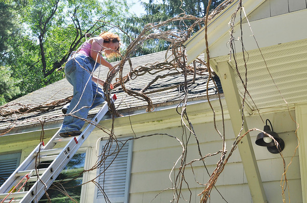 "Hamilton:  Artist Sue Kassirer works on an installation titled ""Eminent Domain,"" of vines that twist and crawl around her home. Her work will be featured in the Art Grows Here exhibit.  photo by Mark Teiwes"