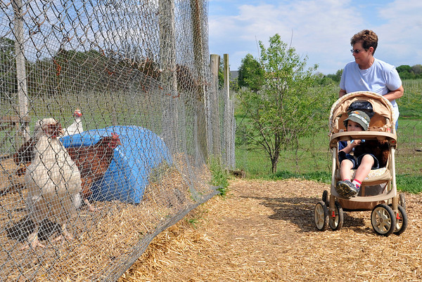 Peabody:  Mary Ann Apostolides of Peabody takes her grandson Thaao Papakonstantis for a walk around Brooksby farm to check out the animals.    photo by Mark Teiwes / Salem News