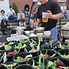 Salem: Tony Bettencourt, chef and owner of 62 Restaurant and Wine Bar, gives samples and a cooking demonstration the Salem Farmers' Market using local ingredients from the venders.  photo by Mark Teiwes / Salem News