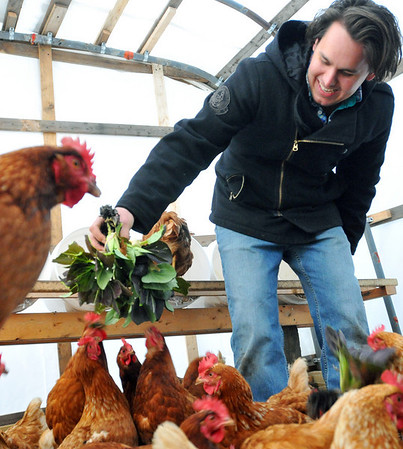 Hamilton: Andy Varela, feeds the chickens some greens at Maitland Mountain Farm.  photo by Mark Teiwes / Salem News