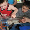 Salem: Aiden O'Laughlin, left and Justin Perez check out some marine life.   photo by Mark Teiwes / Salem News