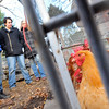 Hamilton: Peter Peter, left, Andy Varela, and Holly Maitland of  Maitland Mountain Farms stand beside on of the two chicken coops on their farm which continue to supply eggs for sale at Milk and Honey Green Grocer in Salem. photo by Mark Teiwes / Salem News
