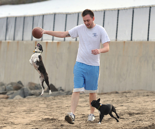 Beverly:  Jake Snyder of Wenham attracted the attention of Boston terrriers Dudley, left, and Lucy while playing football at Dane Street Beach after getting out of work at Monseratt to enjoy the warm weather.  photo by Mark Teiwes / Salem News