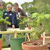Hamilton: LuBeth Kuemmerle, left, Pauline Moroney, and Jeanne Whitman, all members of the Hamilton Wenham Garden club, put on the club's annual plant sale selling plants donated by club members.  Proceeds will go to the club's scholarship fund.  photo by Mark Teiwes / Salem News