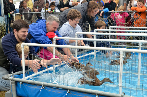 Topsfield: Families release ducks during a duck race at the Topsfield Fair.  photo by Mark Teiwes / Salem News