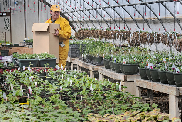 Wenham:  Inside temperature controlled green houses, Mark Penta, co-owner of Canaan Farm, works in preparation for the upcoming growing season.  Small plants grow to be ready for Mother's Day.  Lettuce, beets, and kale are being seeded that will be transplanted to the fields mid-April, weather permitting.   photo by Mark Teiwes / Salem News
