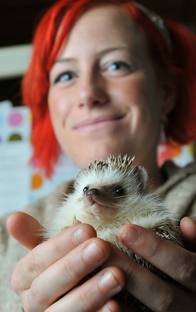 Marblehead:   Hilary Emerson Lay and her pet hedgehog Stanley will featured on Animal Planet Saturday, Dec. 11.  photo by Mark Teiwes / Salem News