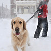 Salem: Kimberly Weeney said that she and her dog Cheddar love the snow as she walks past the Custom House.  photo by Mark Teiwes / Salem News