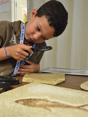 Swampscott:  Shaun McKay of Swampscott, 6, studies a marine fossil during a dinosaurs and fossils program at the Swampscott Public Library.  photo by Mark Teiwes / Salem News