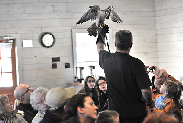 Ipswich:  Jim Parks of Wingmasters holds a peregrine falcon during a presentation at the Ipswich River Wildlife Sancuary.  photo by Mark Teiwes  / Salem News