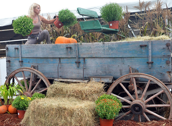 Topsfield: Roberta Whittier of Peabody, Topsfield Fair maintenance worker, decorates a wagon with mums and pumpkins for a picture taking scene.  Preparations are being finalized with the opening of the Topsfield Fair on September 30th. photo by Mark Teiwes / Salem News