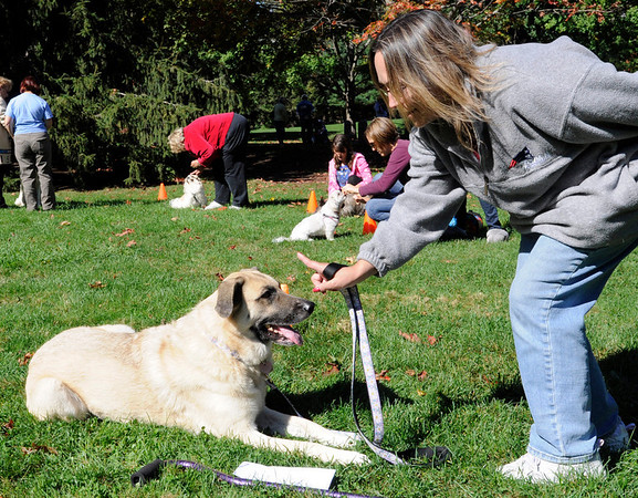 Danvers: Kathy Twomey of Salem works on a command with Tessie, her shepherd mix at a training workshop.