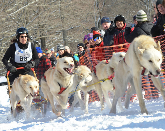 Ipswich: Marla Brodsky takes off at the starting line with her team of 8 dogs competing in the Myopia Sled Dog Races.  photo by Mark Teiwes  / Salem News