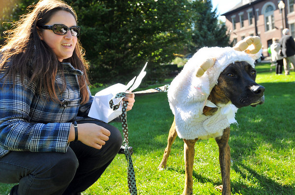 Beverly: Claire Grima of Beverly came with Shea, a boxer mix, dressed as a wolf in sheeps clothing. The event raised money and awareness for a dog park in Beverly.  photo by Mark Teiwes / Salem News