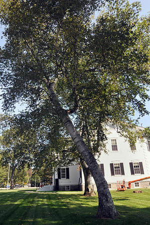 Wenham:  Birch trees stand outside the Wenham Town Hall. photo by Mark Teiwes / Salem News