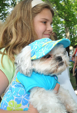 Danvers: Mykayla DeLuca holds Peanut, her toy Shih Tzu, at a dog show raising money for Strays in Need.  photo by Mark Teiwes / Salem News