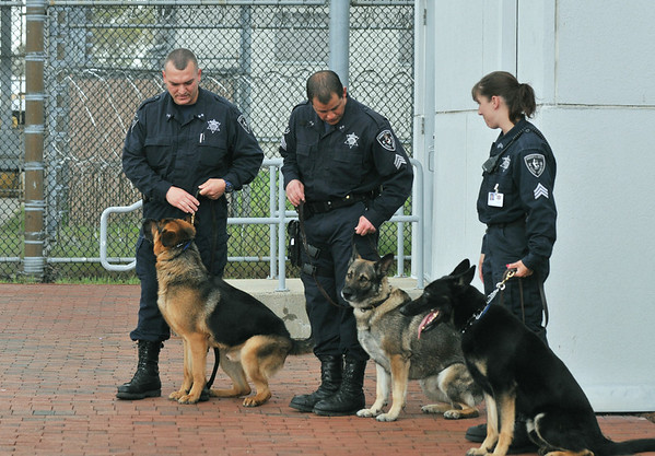 Middleton:  Essex County Sheriff's Department K-9 unit Sergeants stand together outside the Middleton Jail.  Steve Tsoukalas, left, with his partner Dozer, Don Evans, with Blitz, and Jennifer Walsh with Jake.   photo by Mark Teiwes / Salem News