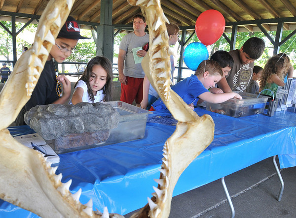 Salem: Children look at marine life during the annual Read Buffam Science and Family Picnic.   photo by Mark Teiwes / Salem News