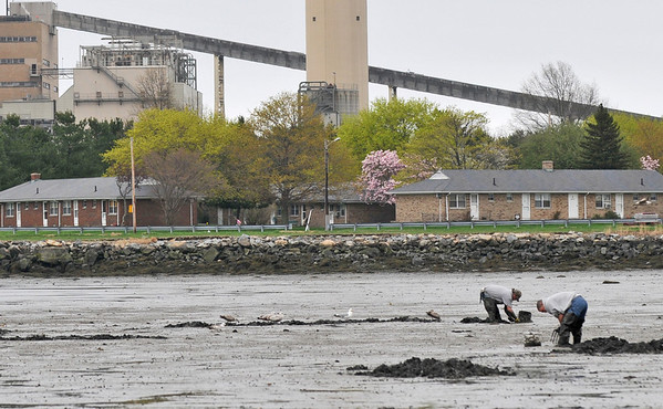 Salem: Clamers dig harvesting food at low tide.  photo by Mark Teiwes