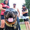 "Salem:  Chrissy Derby, left, Ruben Cunha, and Meghan Derby of Salem dressed up as members of the Jersey Shore along with their dog Amboss. Sunday's Heritage Days Dog Show theme was ""Is Your Dog a Reality Show Star?""  photo by Mark Teiwes / Salem News"