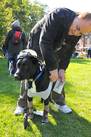 Beverly: Dennis Dalton of Beverly reattaches a pocket protector his dog Dustin dressed as a nerd.  photo by Mark Teiwes / Salem News